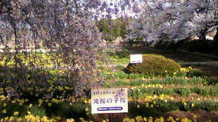 〓三大桜〓